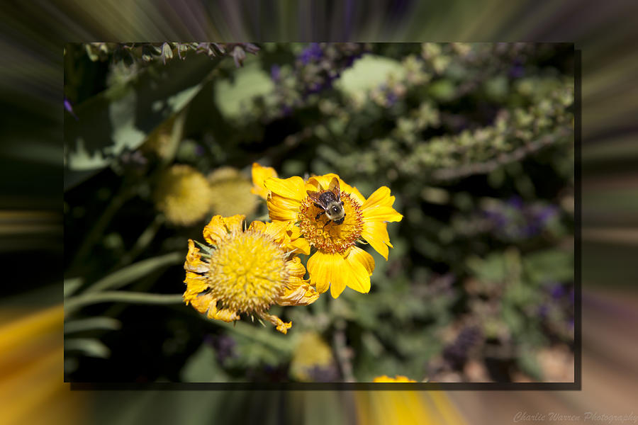 Flower Photograph - Behave by Charles Warren