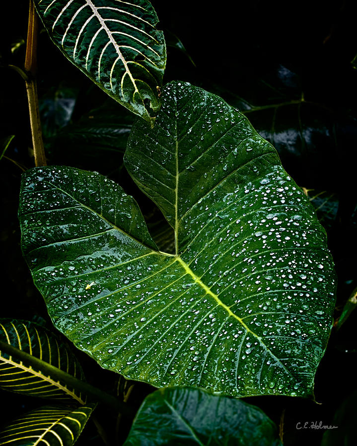 Bejeweled Leaf Photograph  - Bejeweled Leaf Fine Art Print