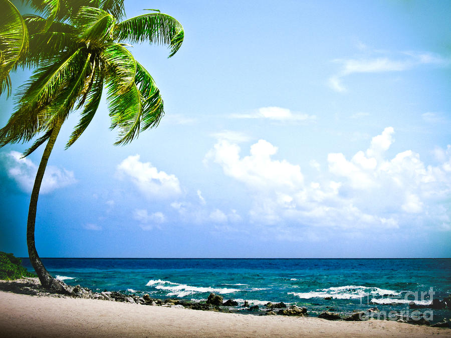 Belize Private Island Beach Photograph  - Belize Private Island Beach Fine Art Print