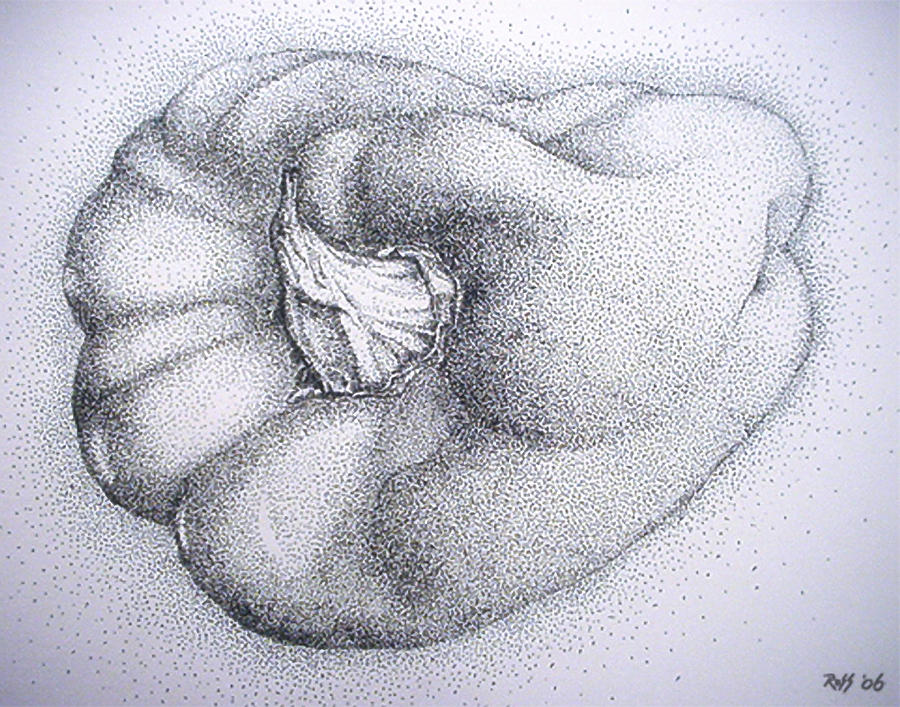 Bell Pepper Drawing  - Bell Pepper Fine Art Print