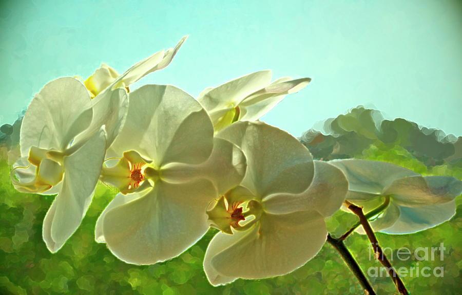 Belleza Blanca Photograph