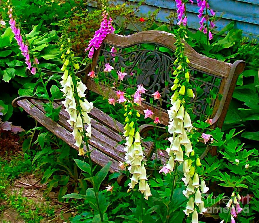 Bench Among The Foxgloves Photograph