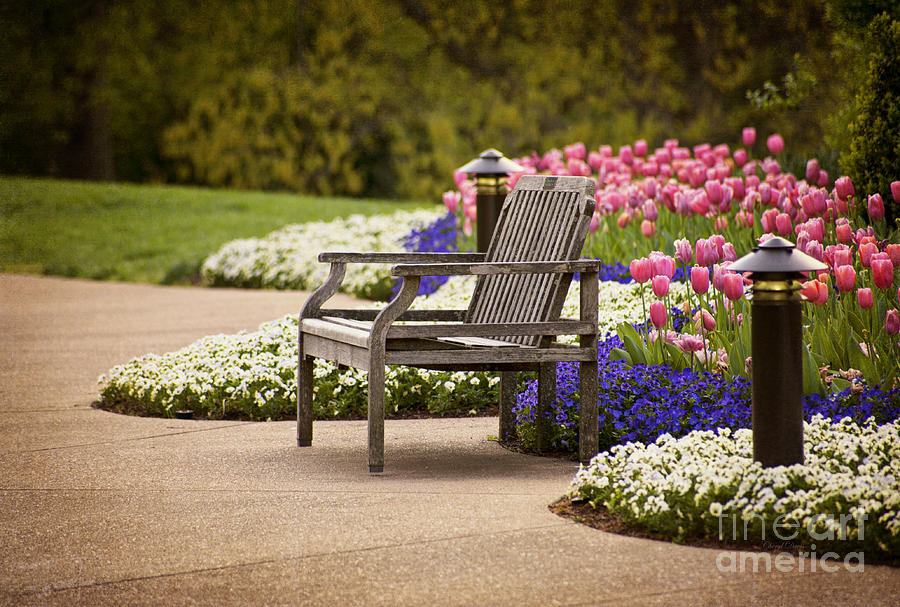 Bench In The Park Photograph