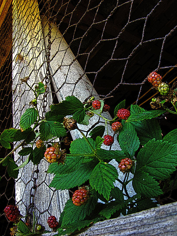 Rocky River Photograph - Berries by Jessica Brawley