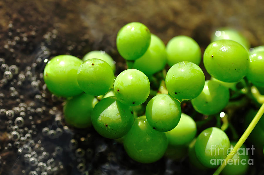 Berries On Water Photograph  - Berries On Water Fine Art Print