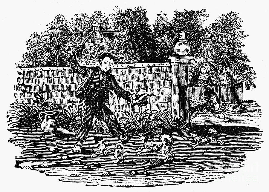 Bewick: Boy With Dogs Photograph  - Bewick: Boy With Dogs Fine Art Print