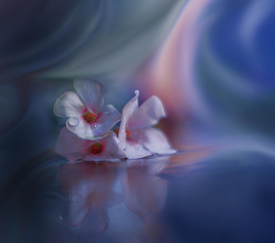 Beyond The Visible Photograph By Juliana Nan
