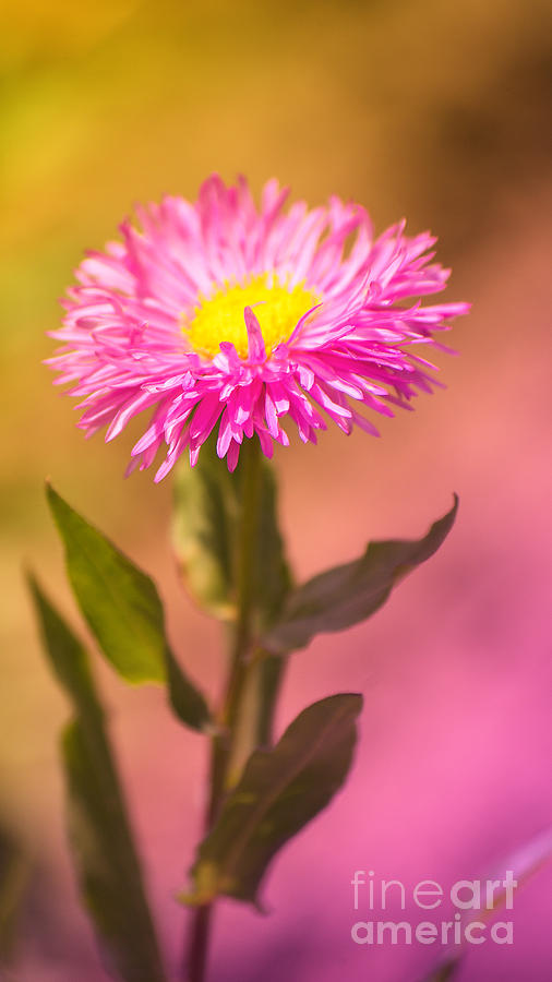 Flower Photograph - Little Flower by Angela Doelling AD DESIGN Photo and PhotoArt
