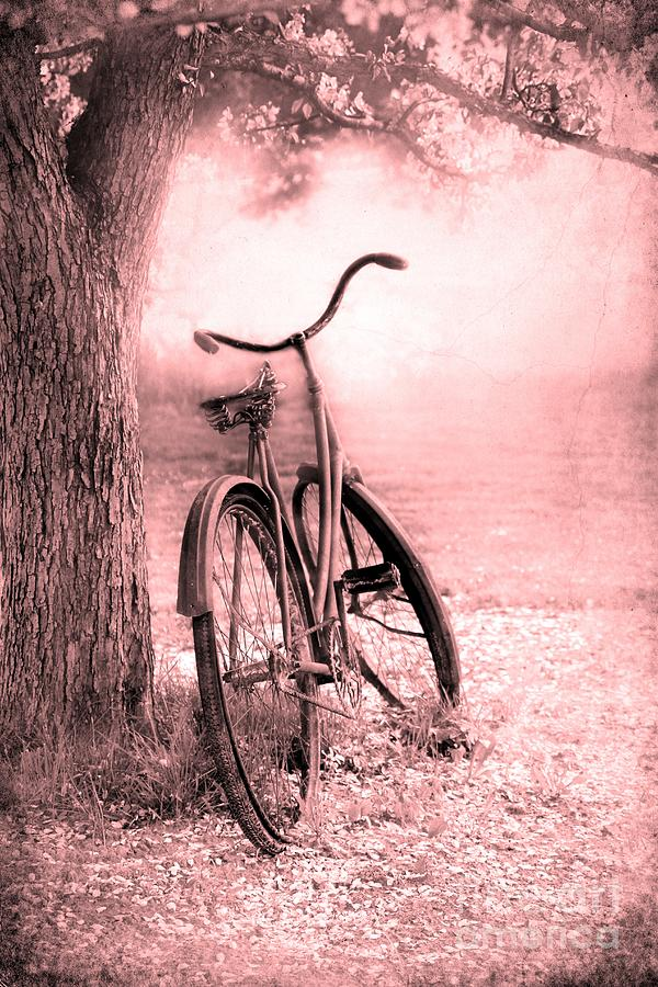 Bicycle In Pink Photograph
