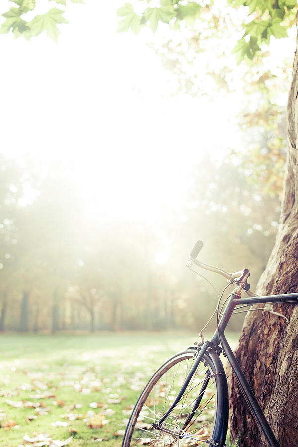 Bicycle Leaned On Big Tree In Sunlight. Photograph