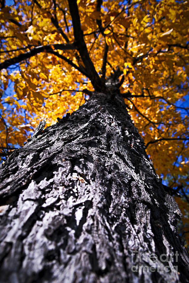 Big Autumn Tree In Fall Park Photograph