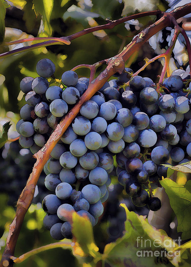 Big Bunch Of Grapes Photograph  - Big Bunch Of Grapes Fine Art Print