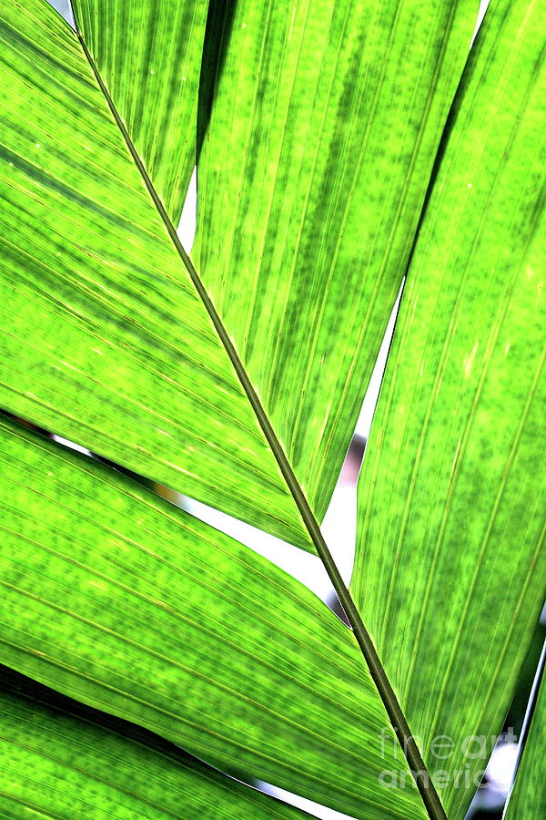 Big Green Leaf . 7d5763 Photograph  - Big Green Leaf . 7d5763 Fine Art Print