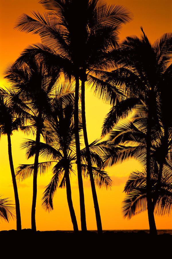 Big Island, View Photograph