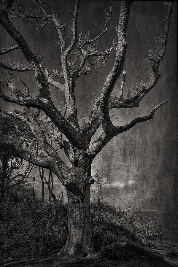 Black And White  Photograph - Big Talbot Island by Mario Celzner