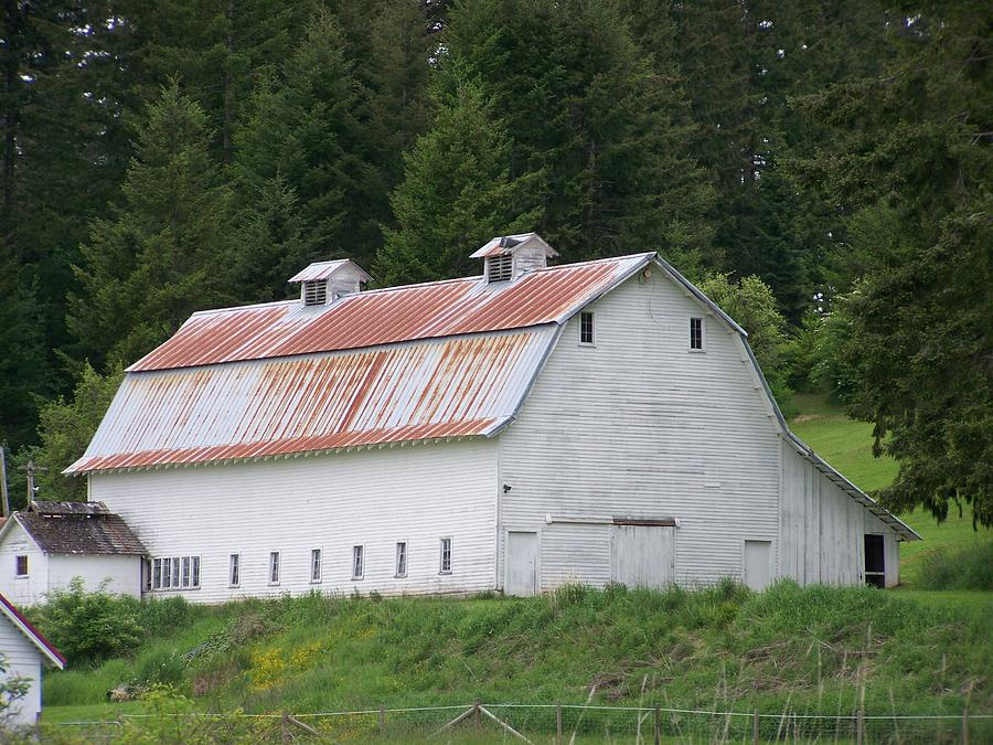 Big White Old Barn With Rusty Roof  Washington State Photograph