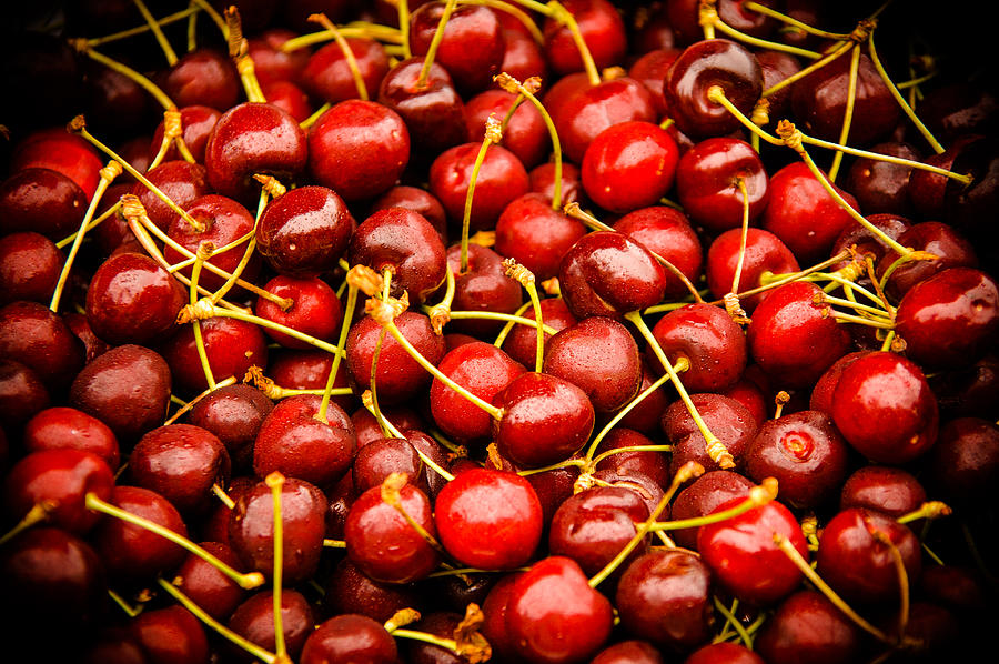 Bing Cherries Photograph  - Bing Cherries Fine Art Print