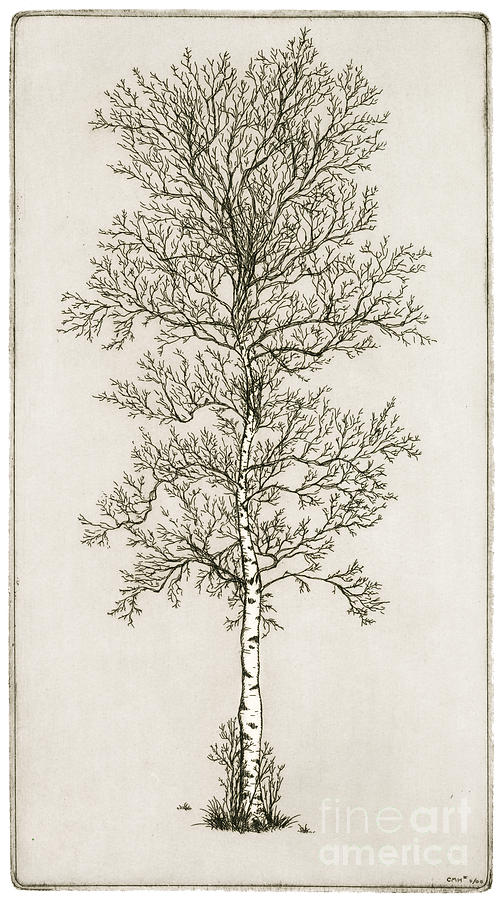Sketch On Pinterest Tree Drawings Weeping Willow And