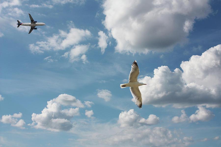 Bird And Flight Agaisnt Sky Photograph