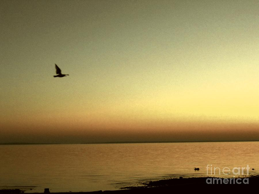 Seagull Photograph - Bird At Sunrise - Sepia by Desiree Paquette