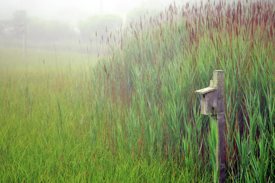 Bird House In Quogue Wildlife Preserve Photograph