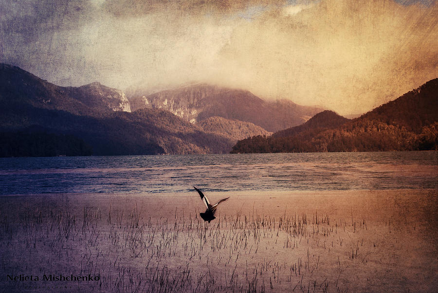Bird In Flight Photograph  - Bird In Flight Fine Art Print