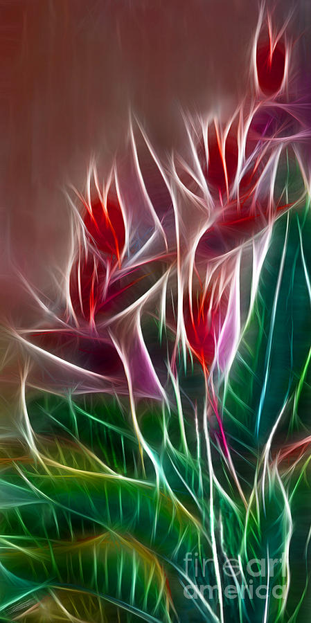 Bird Of Paradise Fractal Digital Art  - Bird Of Paradise Fractal Fine Art Print
