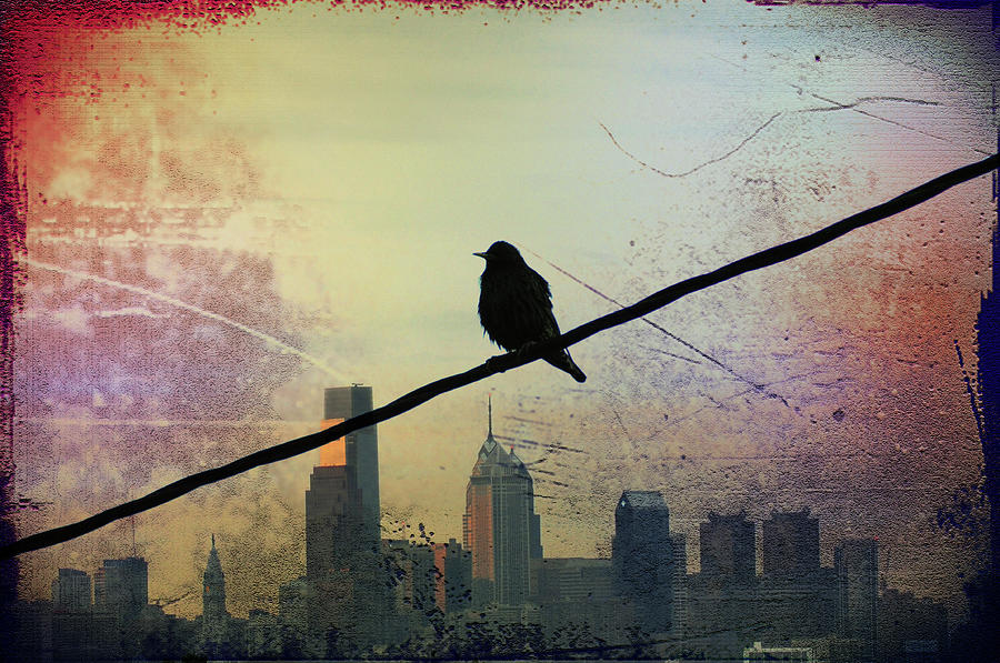 Bird On A Wire Photograph  - Bird On A Wire Fine Art Print