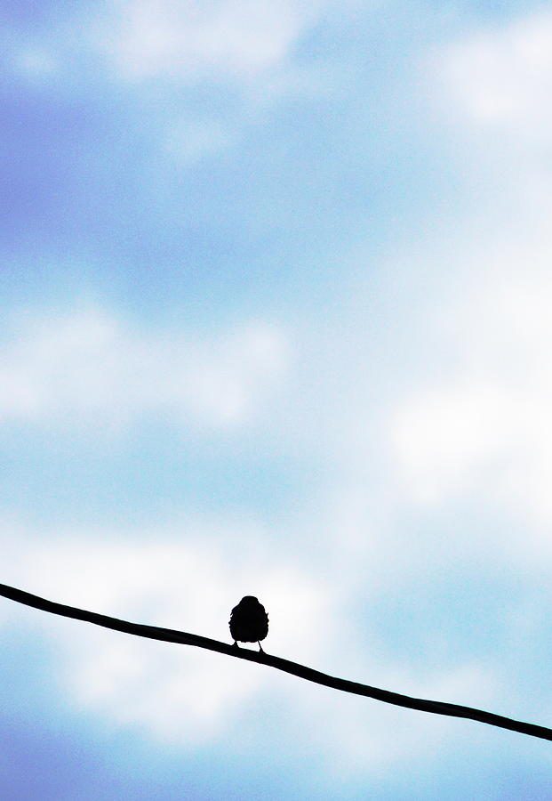 Bird Photograph - Bird  On A Wire by Ed Bricker