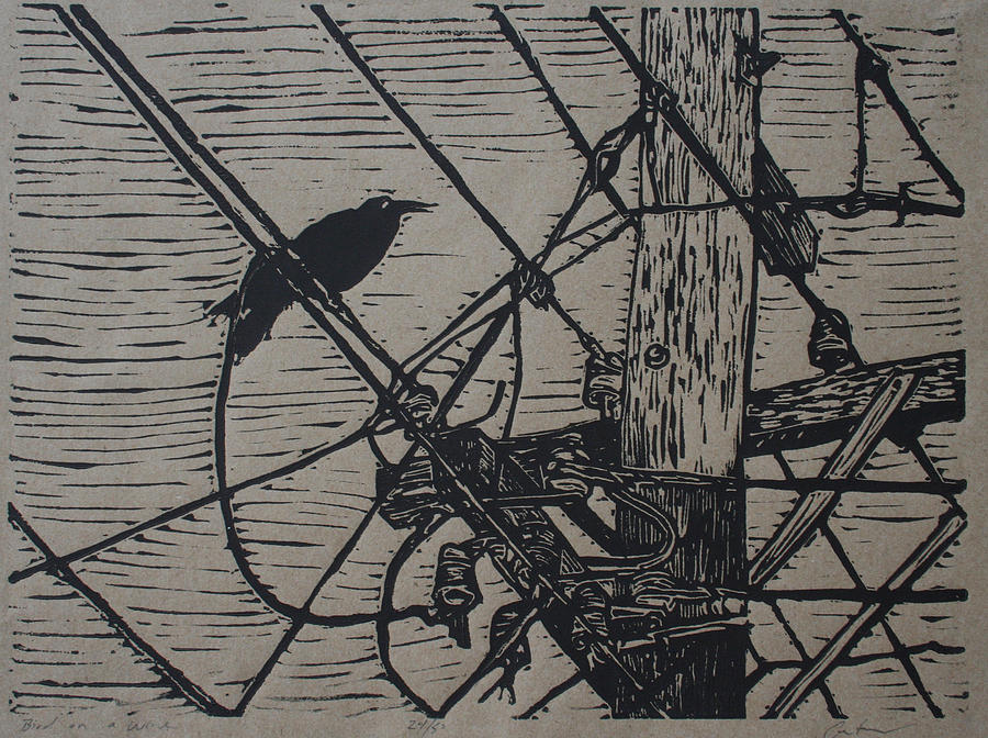 Bird Drawing - Bird On A Wire by William Cauthern