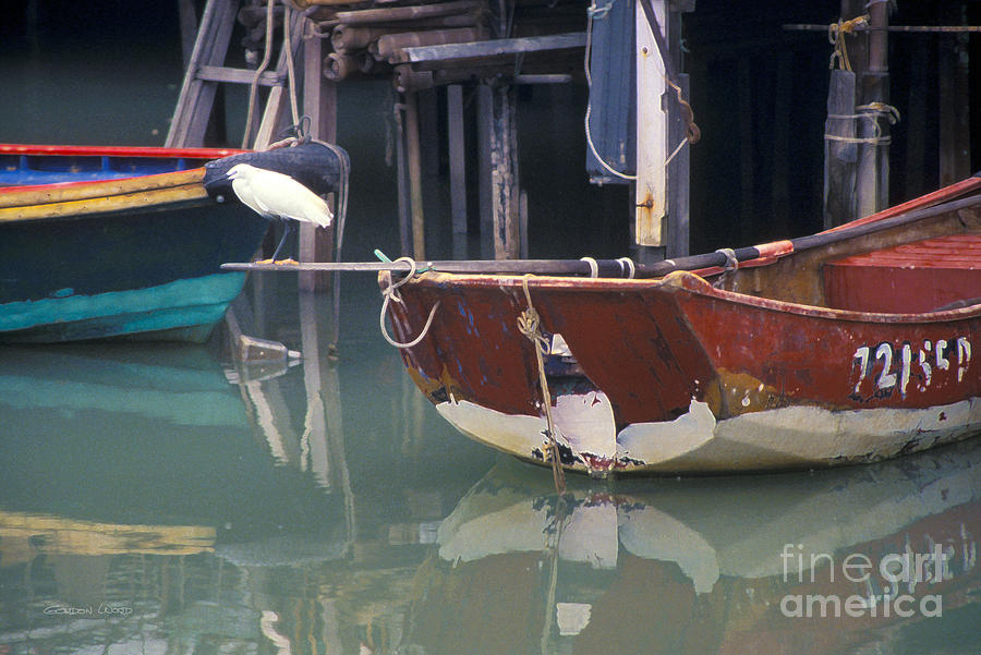 Bird On Boat Oar - Hong Kong Photograph