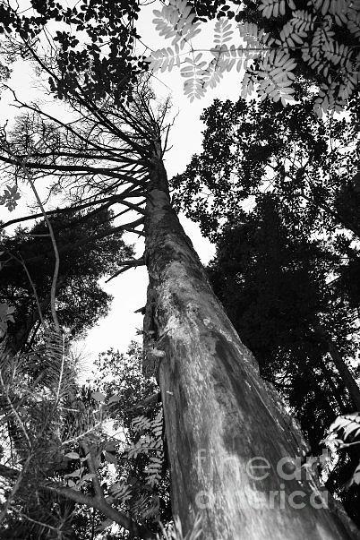 Forest Photograph - Bird Perspective by Derya  Aktas