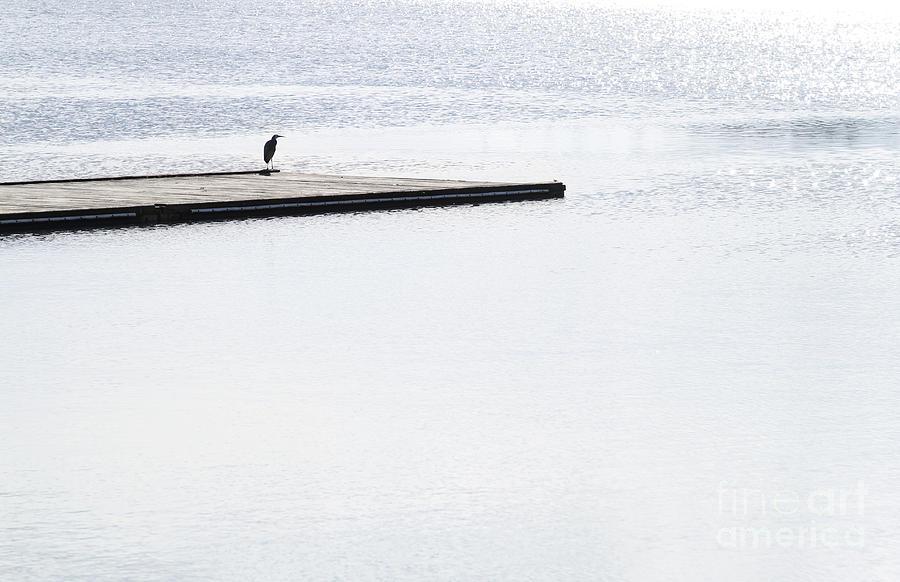 Bird Resting Photograph