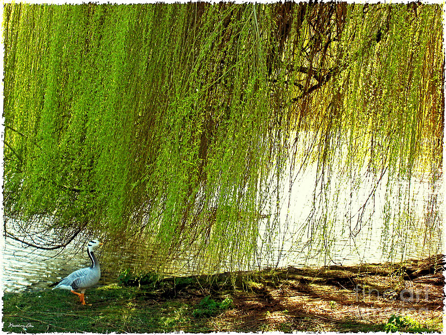 Bird Under Weeping Willow by Madeline Ellis