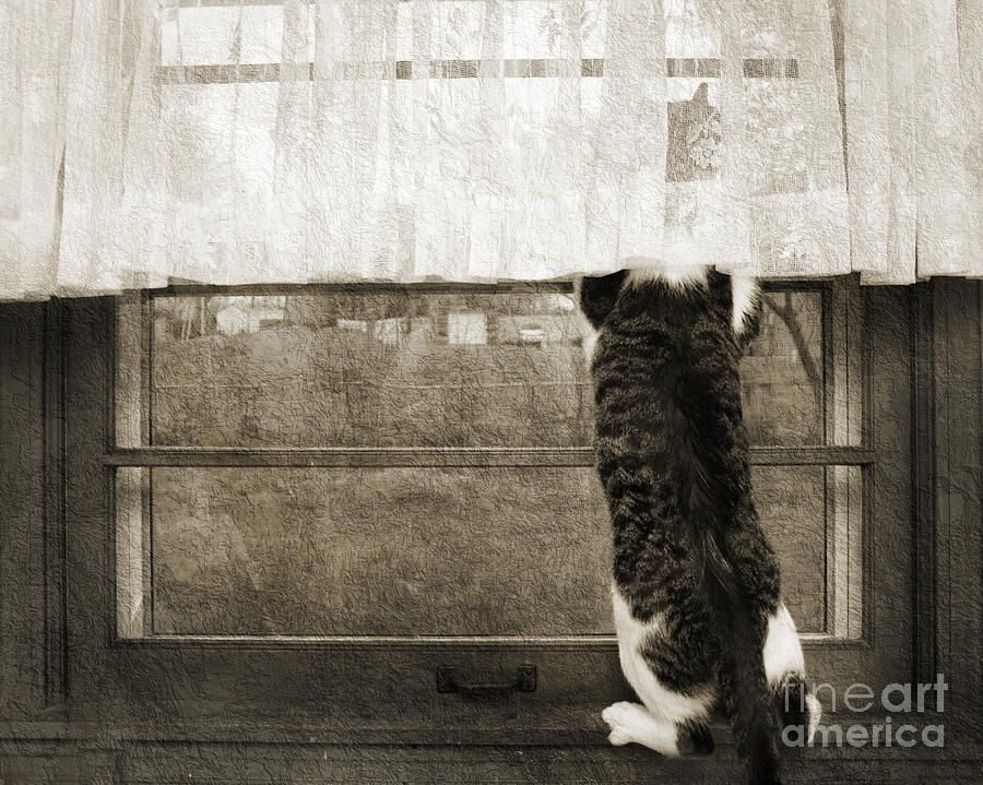 Bird Watching Kitty Cat Bw Photograph  - Bird Watching Kitty Cat Bw Fine Art Print