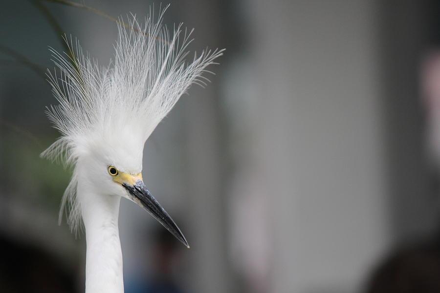 Bird2 Photograph