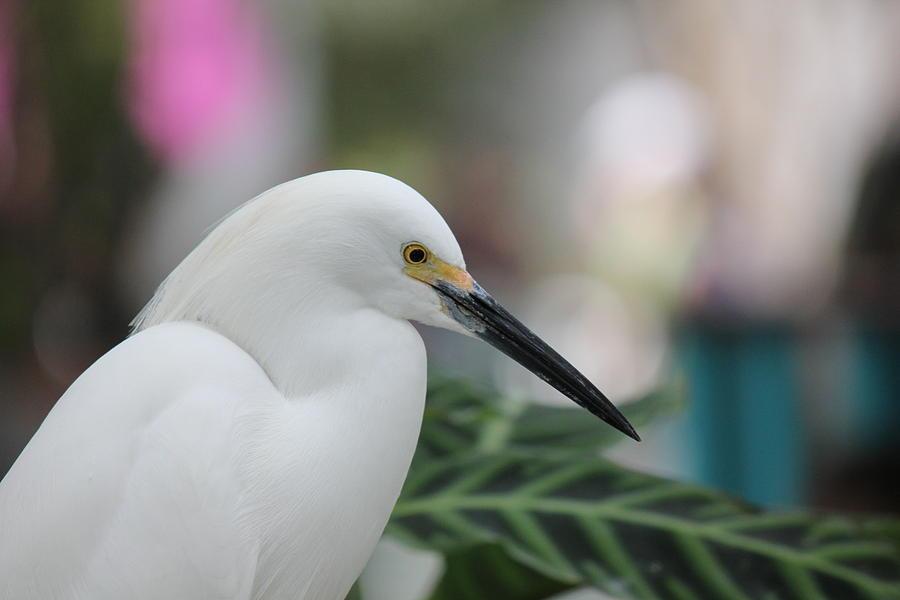 Bird3 Photograph