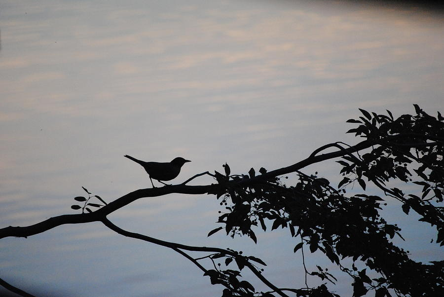 Birds And Silhouettes  Photograph