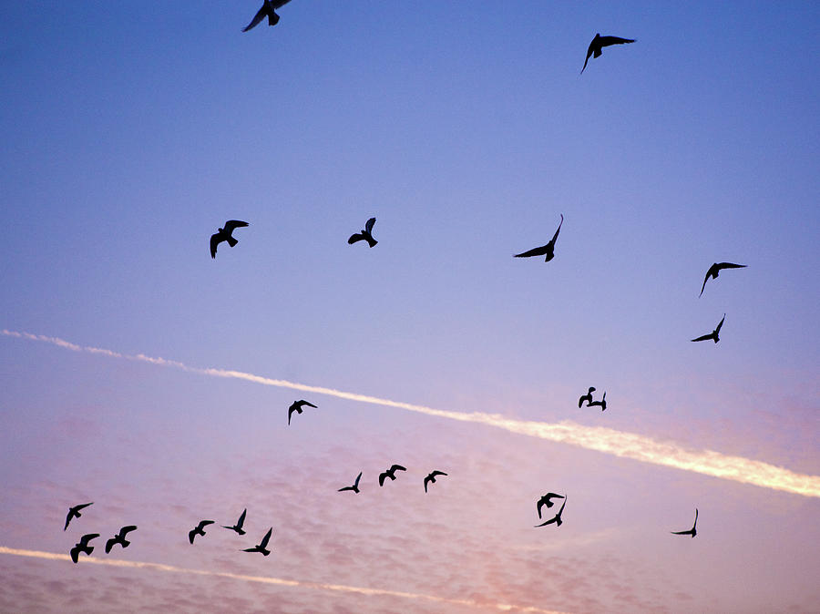 Birds Flying At Sunset Photograph