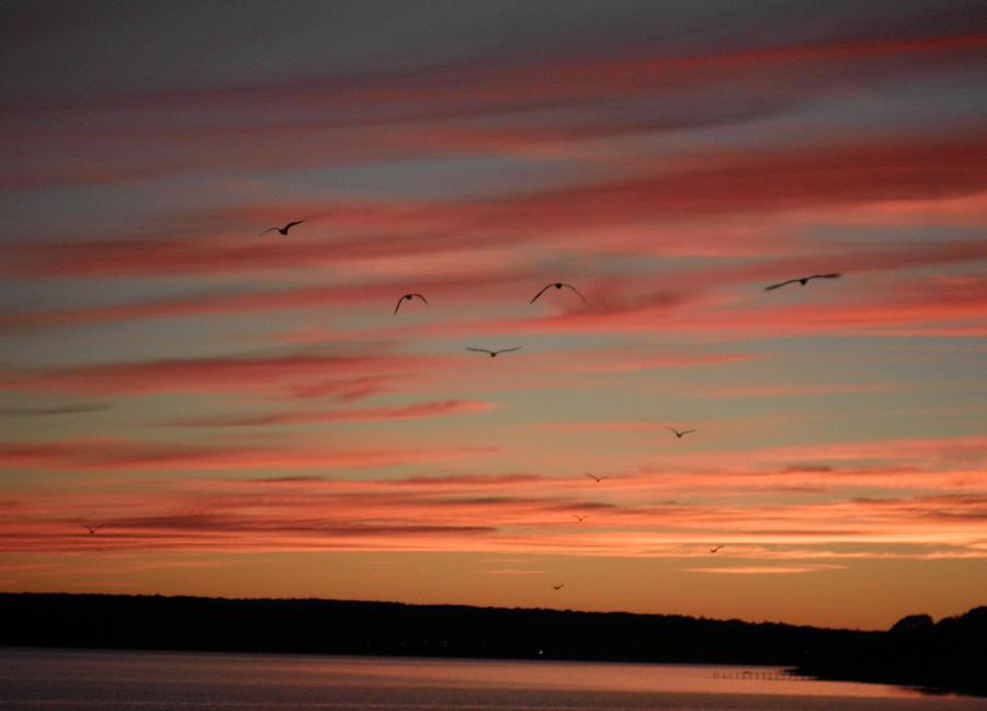 Birds Flying in The Sunset Birds Flying in Sunset
