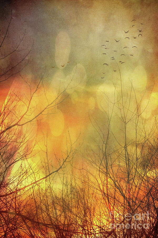 Birds In Flight At Sunset Photograph  - Birds In Flight At Sunset Fine Art Print