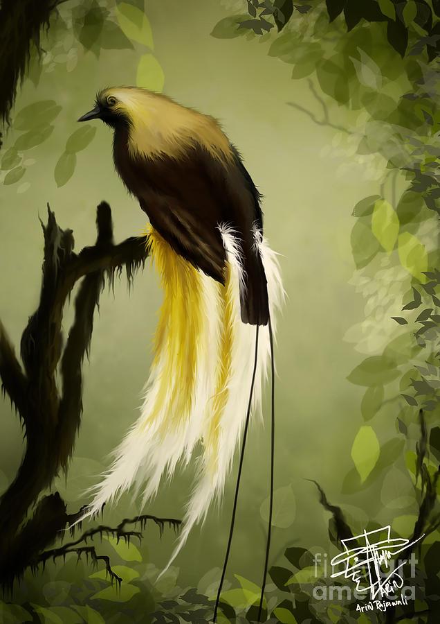 Rsultats de recherche dimages pour bird of paradise art digital