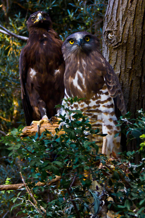 Birds Of Prey Photograph
