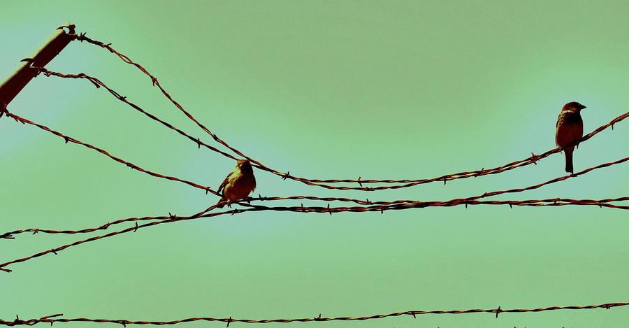 Birds On A Wire Photograph  - Birds On A Wire Fine Art Print