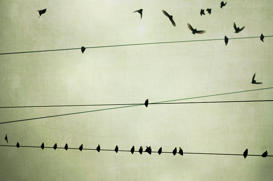 Birds On Telephone Wire Photograph