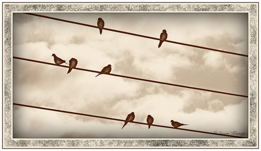 Birds On Wires Digital Art