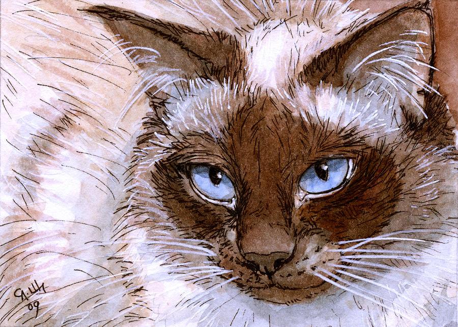 Birman Cat - Blue Eyes. Painting