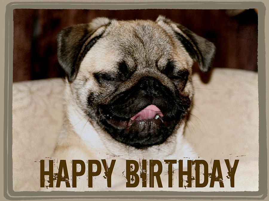 birthday-pug-veronica-ventress.jpg
