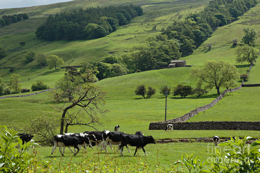 Bishopdale In The Yorkshire Dales National Park Photograph