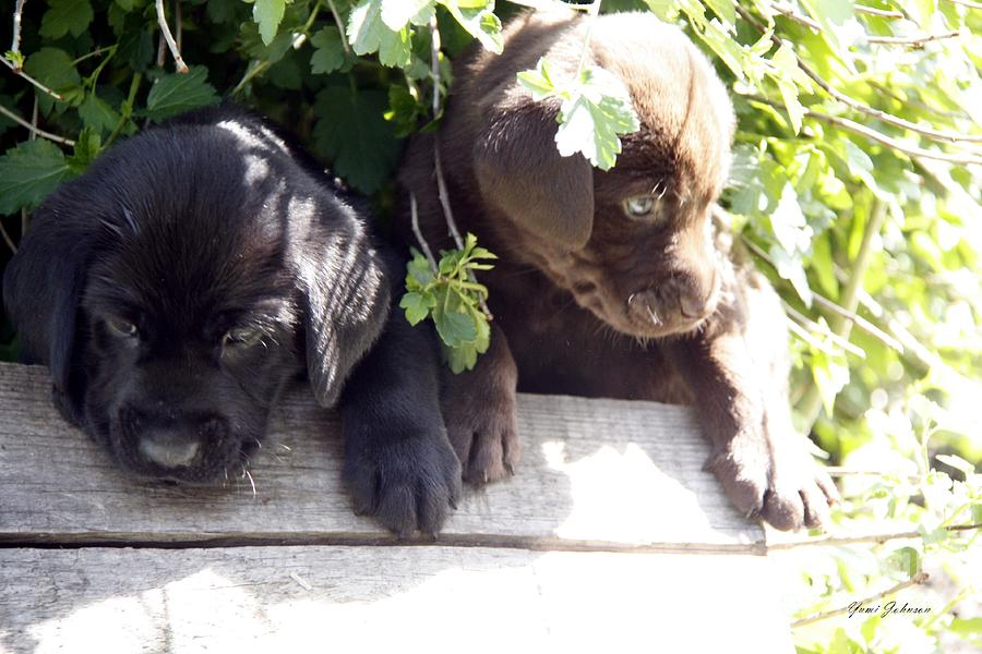 Black And Brown Puppies Photograph by Yumi Johnson